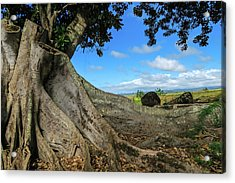 Tree Stump Acrylic Print by Jera Sky