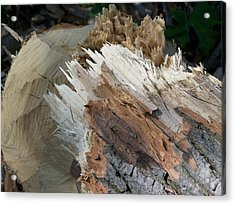 Tree Stump Acrylic Print