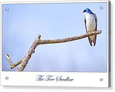 Tree Swallow On Branch Acrylic Print by A Gurmankin