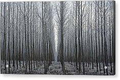 Tree Symmetry Acrylic Print