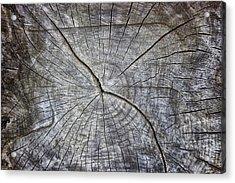 Tree Textures Acrylic Print
