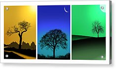 Tree Triptych Acrylic Print by Mark Rogan