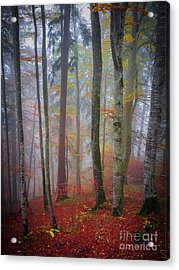 Acrylic Print featuring the photograph Tree Trunks In Fog by Elena Elisseeva