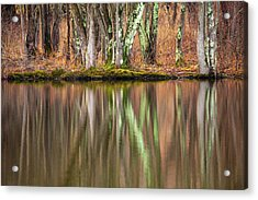 Tree Trunks Reflecting Acrylic Print