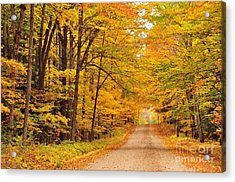 Tree Tunnel On A Country Road Acrylic Print by Terri Gostola