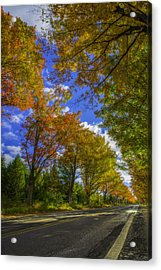 Acrylic Print featuring the photograph Tree Tunnel On M22 by Owen Weber