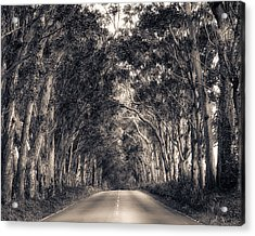 Tree Tunnel Acrylic Print by Robert  FERD Frank
