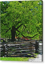 Tree With Colonial Fence Acrylic Print