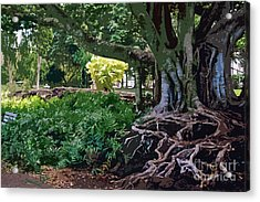 Tree With Roots Acrylic Print