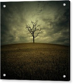 Tree Acrylic Print by Zoltan Toth