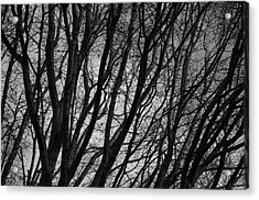 Abstract Branches Acrylic Print by Marilyn Wilson