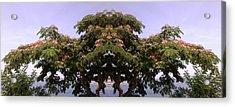 Treegate Neos Marmaras Acrylic Print