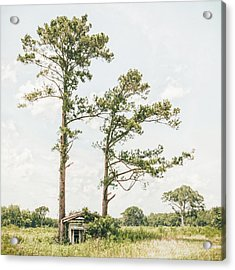 Treehugger Acrylic Print by Humboldt Street