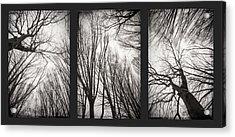 Treeology Acrylic Print by Dorit Fuhg