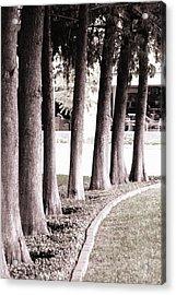 Trees 2 Acrylic Print by Gracey Tran