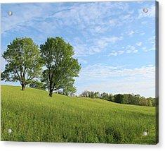 Summer Trees 3 Acrylic Print