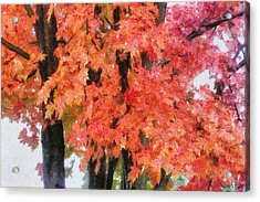 Trees Aflame Acrylic Print by Jeff Kolker