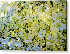 Acrylic Print featuring the photograph Trees And Flowers by D Davila