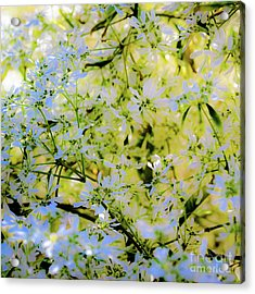 Acrylic Print featuring the photograph Trees And Leaves by D Davila