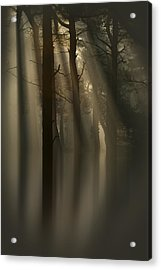 Trees And Light Acrylic Print by Andy Astbury