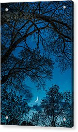 Trees And Moon Acrylic Print by Darren White