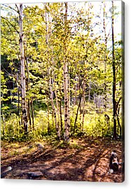 Trees And Shadows Acrylic Print by Eliot LeBow