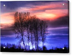 Trees And Twilight Acrylic Print
