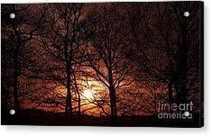 Trees At Sunset Acrylic Print by Michal Boubin