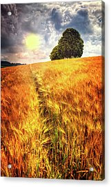 Acrylic Print featuring the photograph Trees At The Top by Debra and Dave Vanderlaan