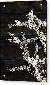 Trees - Blooming Flowers Acrylic Print