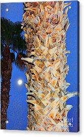 Trees Capture Sun Acrylic Print