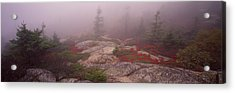 Trees Covered With Fog, Cadillac Acrylic Print by Panoramic Images