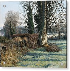 Trees Early Morning In Winter Acrylic Print by Eugene Conway