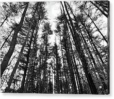 Trees Acrylic Print by Eric Radclyffe