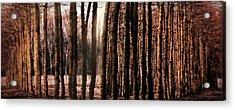 Trees Gathering Acrylic Print by Wim Lanclus