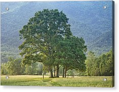 Trees - Great Smoky Mountains - Meadow Acrylic Print by Nikolyn McDonald