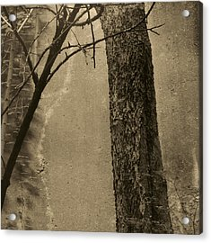 Trees Growing In Silo - Square 2015 Edition - Brown Acrylic Print by Tony Grider