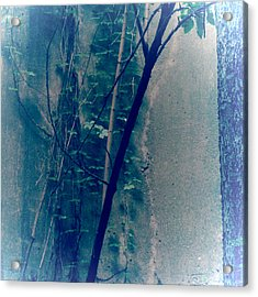 Trees Growing In Silo Abstract- Square 2015 Edition Acrylic Print by Tony Grider