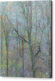 Trees In A Snowstorm Acrylic Print
