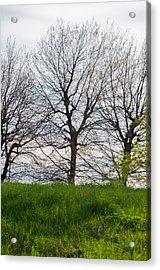 Trees In April - 2  Acrylic Print by Andrea Mazzocchetti