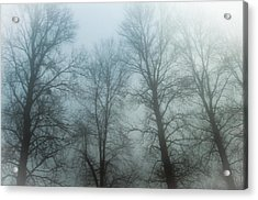 Trees In Mist Acrylic Print by Tetyana Kokhanets