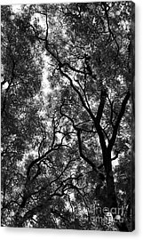 Trees In Park Acrylic Print