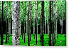 Trees In Rows Acrylic Print