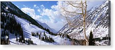 Trees In Snow, Snowbird Ski Resort Acrylic Print by Panoramic Images