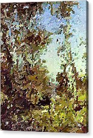 Trees In The Back Yard Acrylic Print by Don Phillips