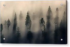 Trees In The Fog Acrylic Print by Jerry Sodorff