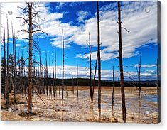 Acrylic Print featuring the photograph Trees In The Midway Geyser Basin by Lars Lentz