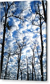 Acrylic Print featuring the photograph Trees In The Sky by Shari Jardina