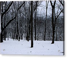 Trees In Winter Acrylic Print by Dave Clark