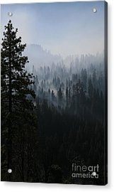 Trees In Yosemite Acrylic Print